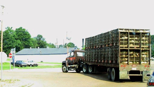 Live bottom poultry trailers