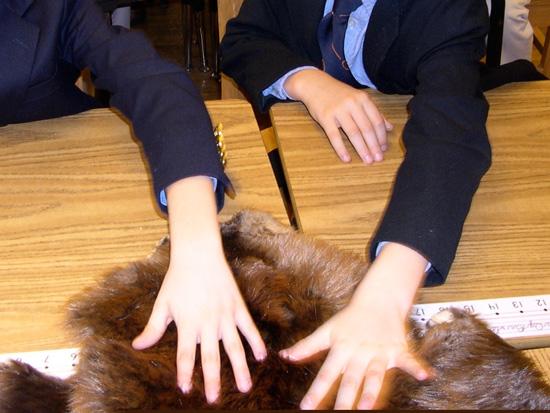 Students feel a fur pelt