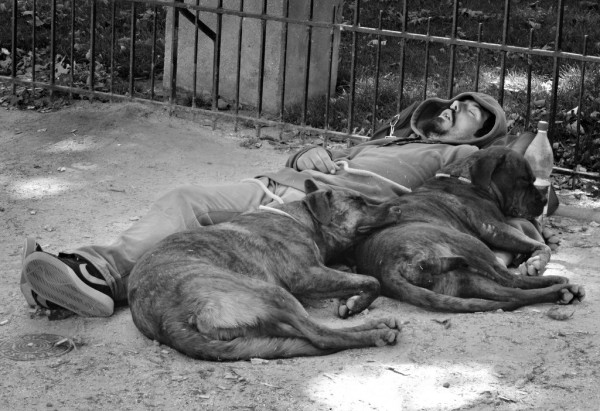 A street person cuddles with two dogs in his sleep